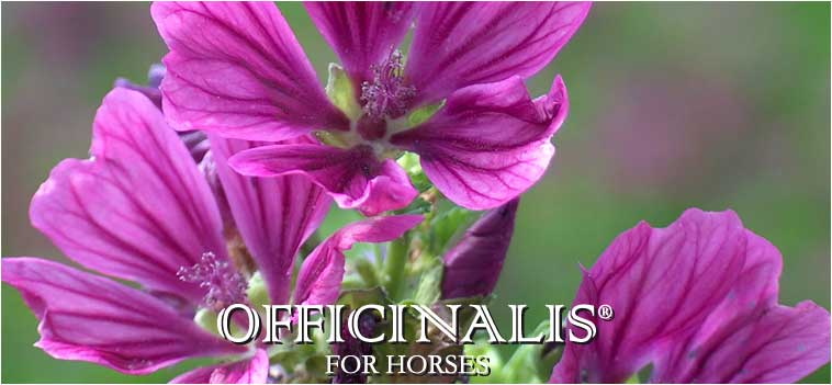 OFFICINALIS FOR HORSES