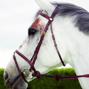 bridle dyon flash