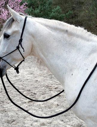 Ethological halter with reins