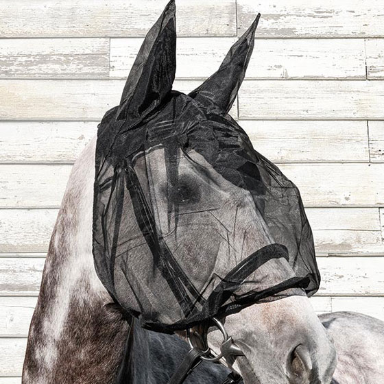 horses fly masch